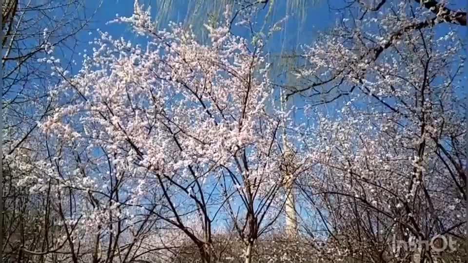 Blooming Flowers in Yuyuantan Park